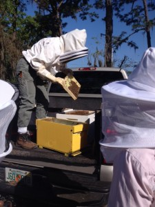 Transferring bees
